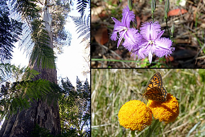 Small group anture tours and bushwalks