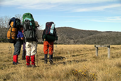Wilderness Bushwalks with with Gippsland High Country Tours
