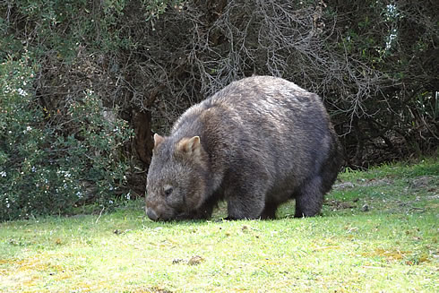 Wildlife tours with Gippsland High Country Tours